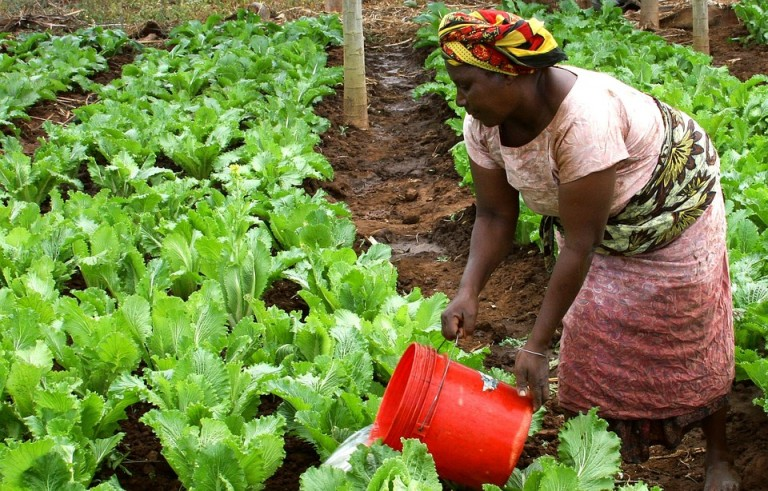Four agriculture-focused companies to inspire Africa